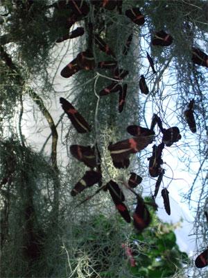 Butterfliesmos2207