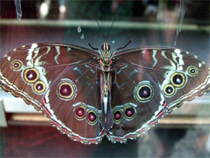 Butterflyglass2207