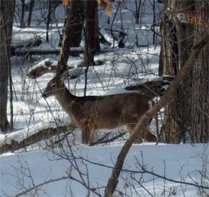 Deermocking2902