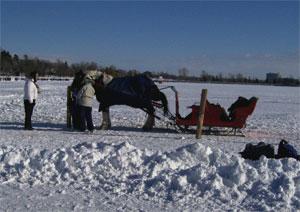 Horsedrawnsleigh0212