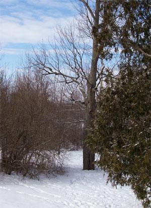 Snowtups0112