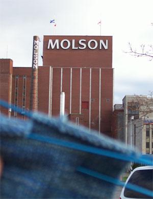 Molsonsock1114