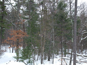 Snowingwoods0203