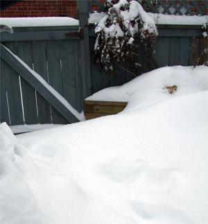 Snowinyrad1612-1