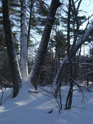Snowwoods20203