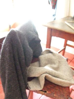 Sweateresonchaircs0708