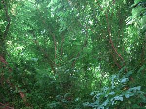 Tree12706