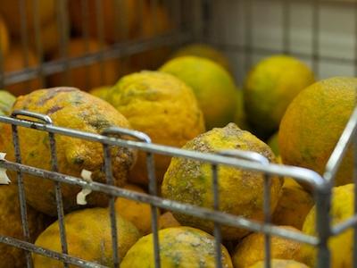 oranges 2014-02-05