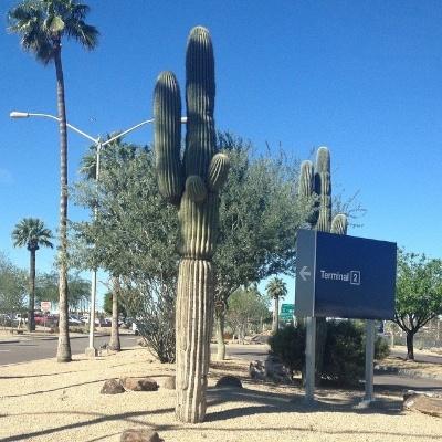cactushangin 2014-03-10