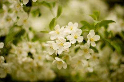 blossomshotel 2014-05-20