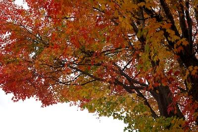 rhinebecktree2 2014-10-22