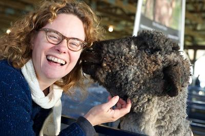 sheepattacktwo 2014-10-22