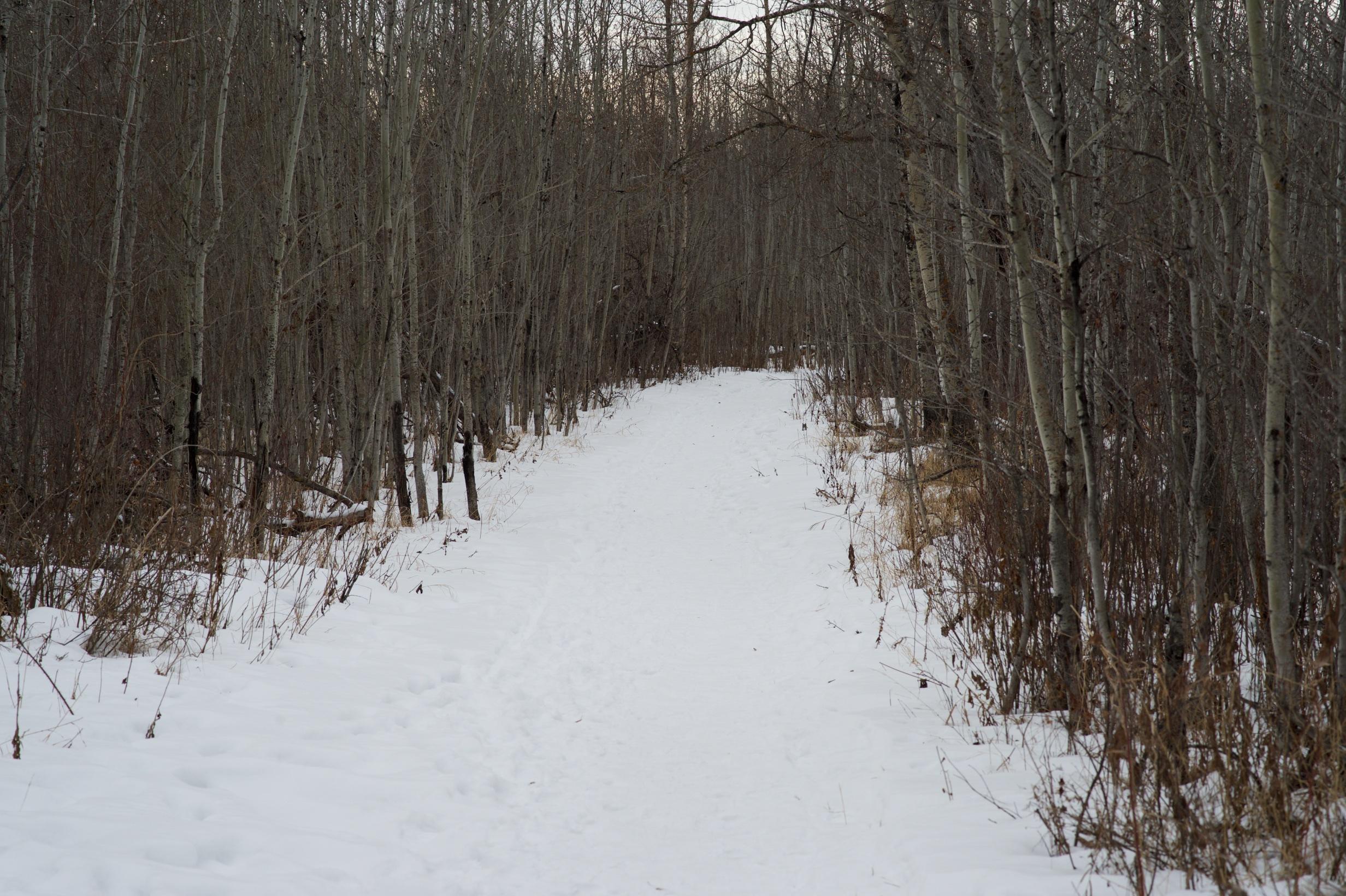 path 2015-01-02