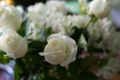 roses  2016-06-20